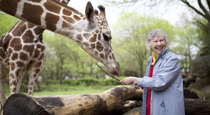 Person with giraffes